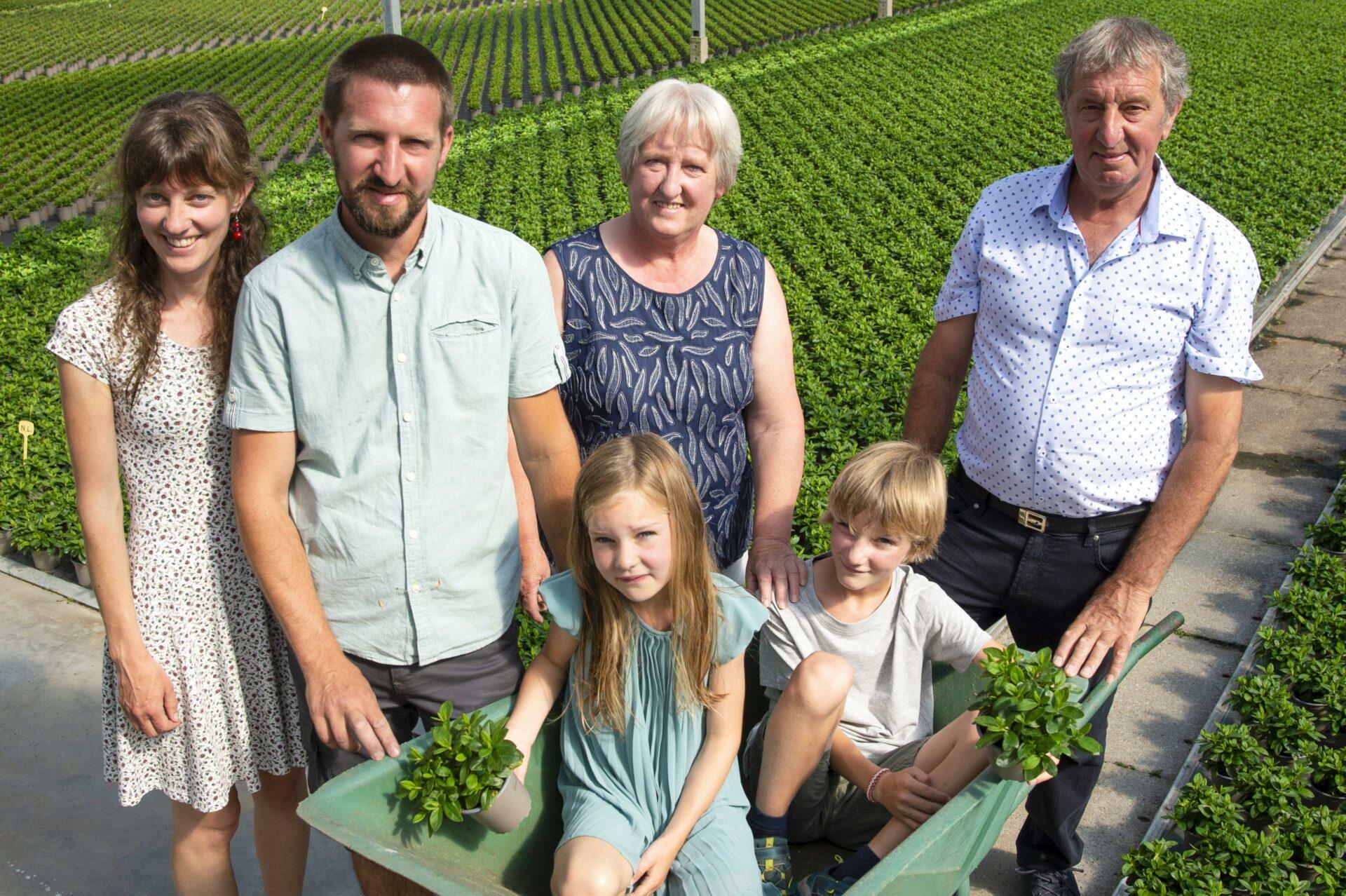 Familie Drieghe van azaleateler Drieghe azalea
